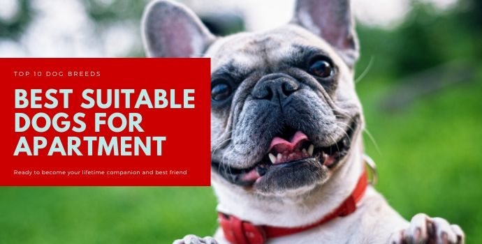 Best suitable dogs for apartment